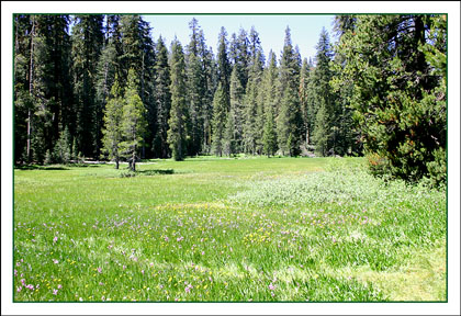 Yosemite romantic meadow on Glacier Point Rd